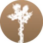 Bioeticatorino